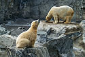 Polar bear cub with mother lurking in the background, Roger Williams Zoo, Providence, Rhode Island, 2001.