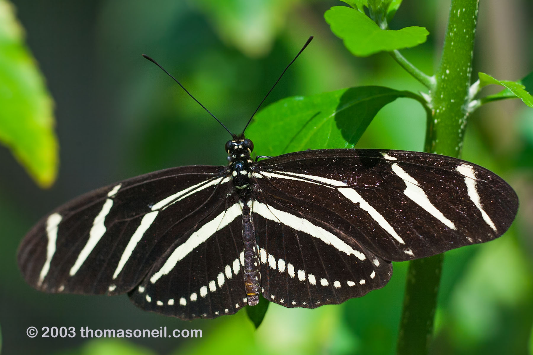 Butterfly house at Sanibel-Capita, Florida 2003.  Click for next photo.