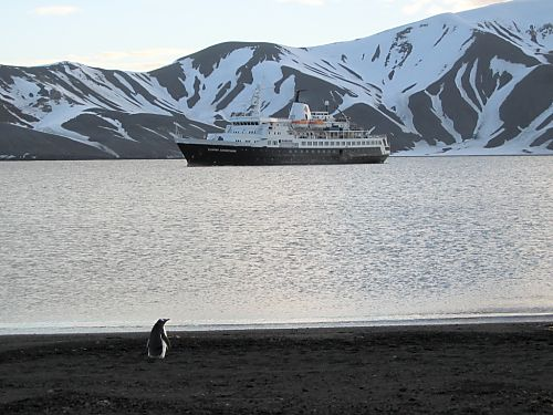 A lone gentoo patrols the beach inside the volcanic crater of Deception Island, late evening Dec. 5.