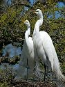An egret pair does their American Gothic pose.