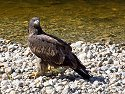 Eagle, British Columbia, September 2004.