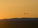 Cranes fly toward the rising run, Bosque del Apache, March 2005.