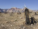 Burned area in Red Rock Canyon, Nevada.