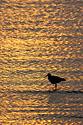 Sunset at Merritt Island NWR, Florida, April 2006.