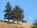 Moon rising, Custer State Park.