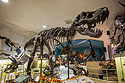Tyrannosaurus Rex named Stan, Black Hills Institute, Hill City, October.  That's not his real skull (see next photo).