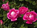Queens Botanic Garden, New York, May 2012.