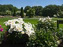 New York Botanical Garden, May 2012.