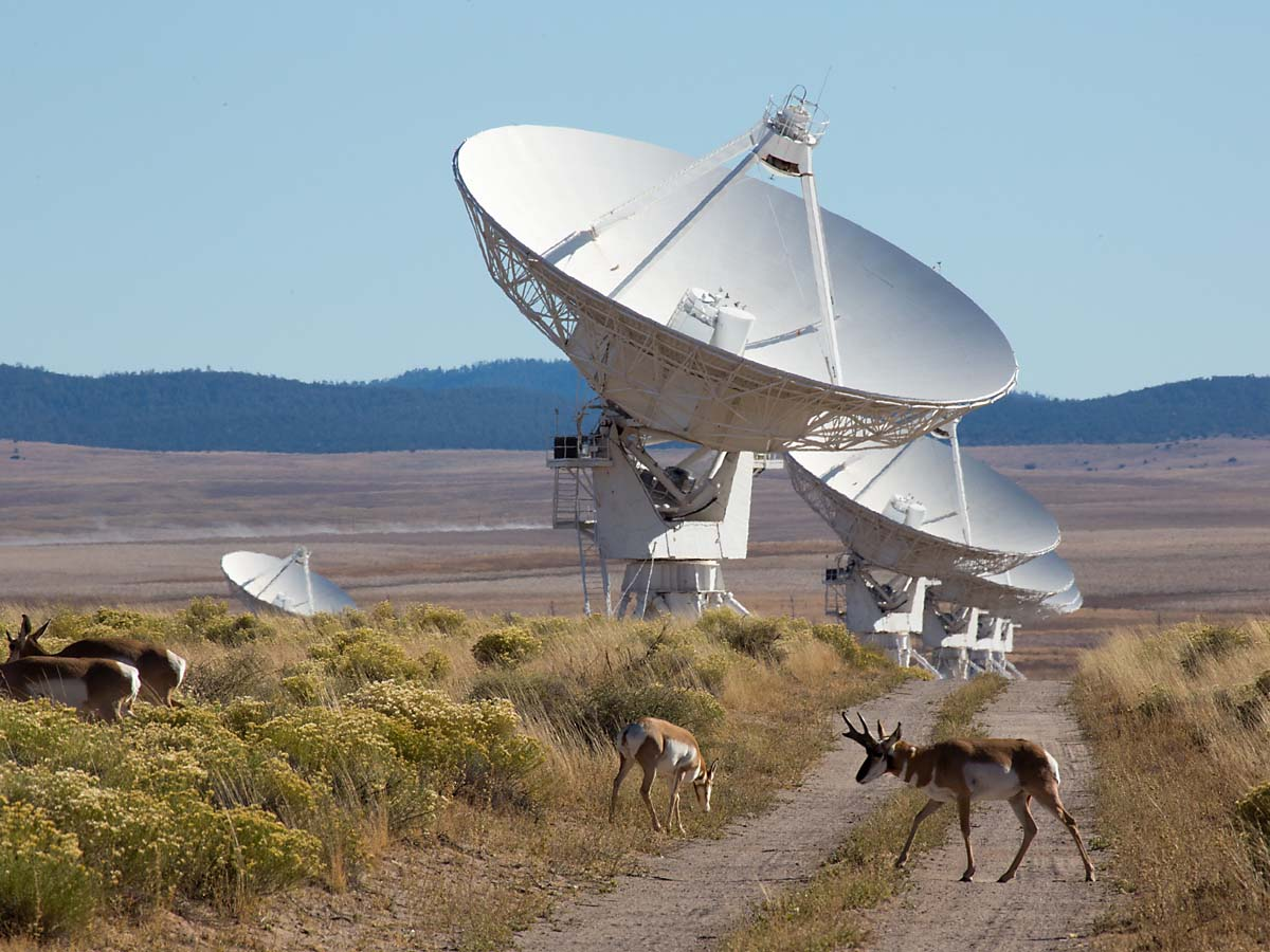 Pronghorns patrol the Very Large Array, New Mexico, October 2013.  Click for next photo.