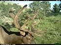 Elk on trail camera, Wind Cave National Park, South Dakota, July 9, 2013.