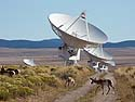 Pronghorns patrol the Very Large Array, New Mexico, October 2013.