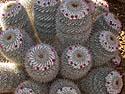 Desert Botanical Garden, Phoenix, October 2013.