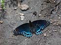 Butterfly, Newton Hills State Park, SD, June 2014.