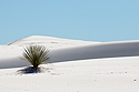 White Sands National Monument, New Mexico, November 2015