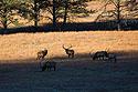 Elk along the highway, Wind Cave National Park, 2016.