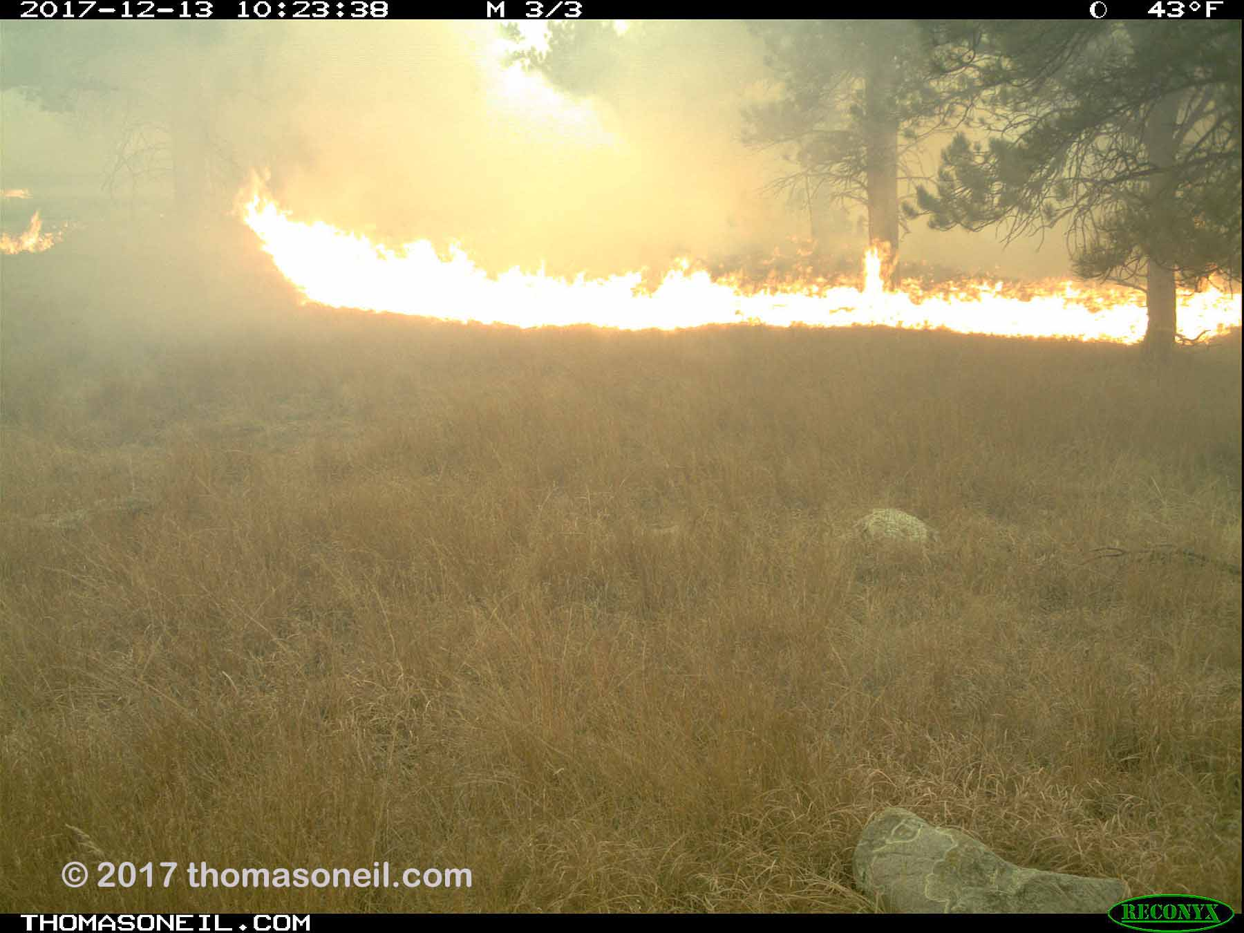 Just 30 seconds after the previous image, fire starts to engulf tree at center-right, Wind Cave National Park.