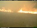 Fire advances, Wind Cave National Park.