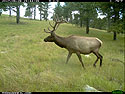 Elk, June 28, 2017.