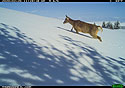 Deer near Luther, MT, 2020.